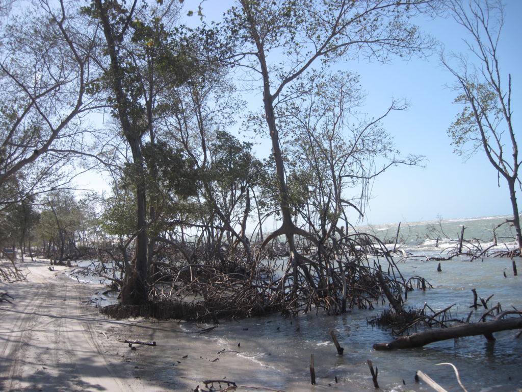 Droga przez las namorzynowy - na lagunę koło Guriu