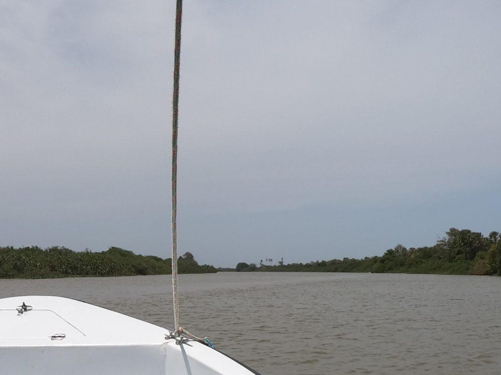 Porośnięte mangrowcami zakola Parnaiby